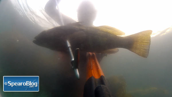 Spearfishing Session 5-7-12