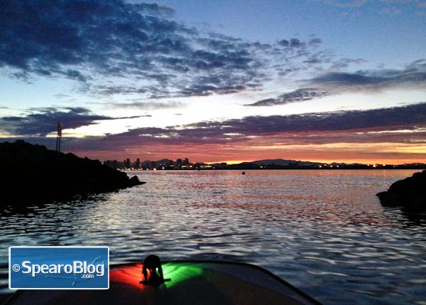 Early Morning Spearfishing In Kelp