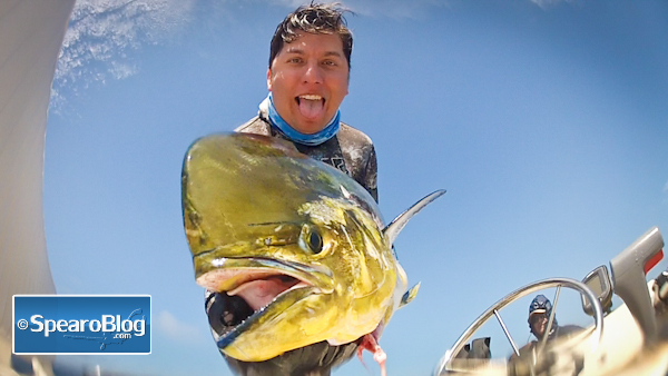 Spearfishing Dorado Off San Diego