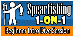 Spearfishing San Diego Intro Dive