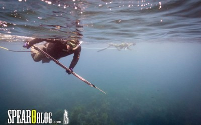 What Do You Want To Know About Spearfishing?