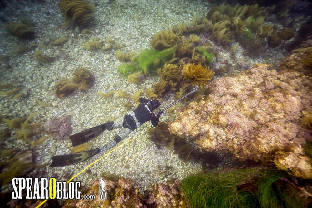TS 007: Volker Hoehne's Spearfishing Journey