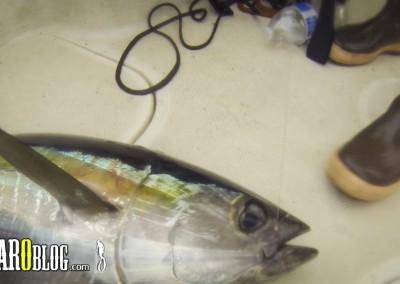 Fishing Tuna GoPro Mount-16