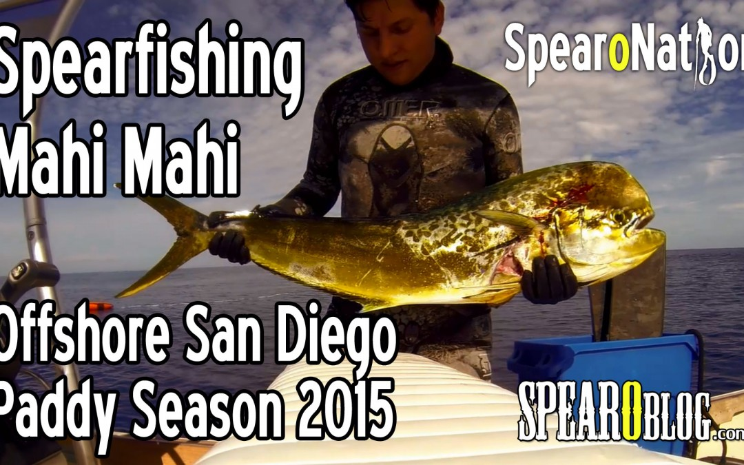 Spearfishing San Diego Offshore 2015 Paddy Season