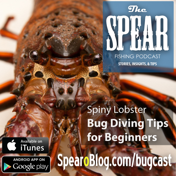 TS 033: Lobster Diving Primer for New Spearos (California Bug Diving)